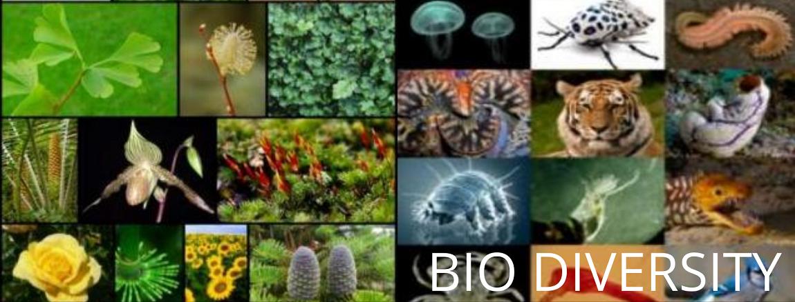 Plant Variety & Bio Diversity